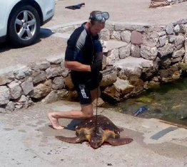 morska kornjača, Stoliv