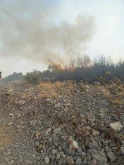 Požar kod golf terena Luštica bay