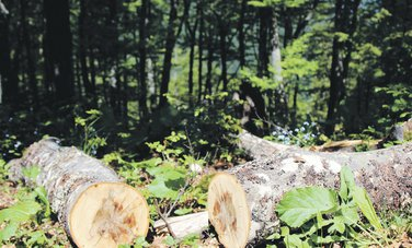 drva, šuma