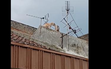 Mačke na krovu