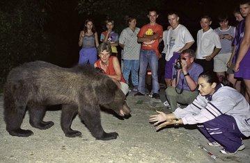 Medvjed, Rumunija, Drakulin zamak