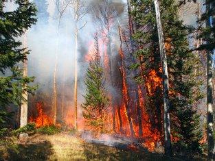 šuma, požar