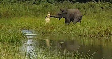 Slon krokodil