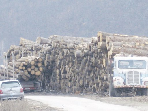 drva, Berane
