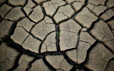 Suša pogodila brojna područja