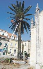 palma Herceg Novi