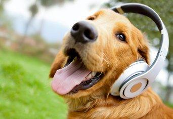 pas, muzika