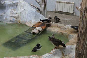 zoo vrt, patke