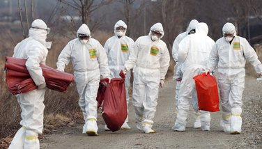 Južna Koreja ptičiji grip
