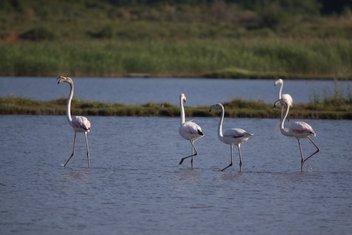 ptice Solana