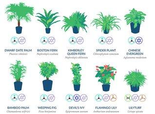 nasa biljke
