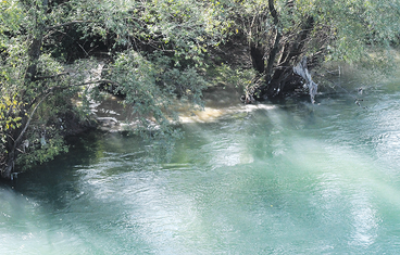 Fekalije, Morača