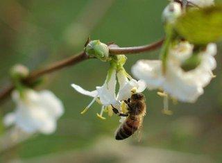 Pčela, Lijepo vrijeme