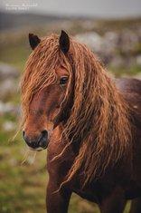 divlji konji, Bosna