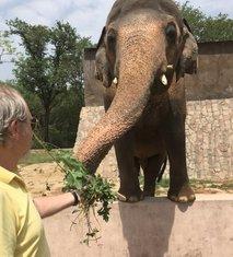 slon Kavan