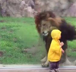 Lav i dječak