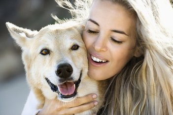 pas, kućni ljubimac
