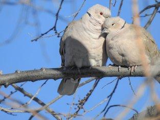 ljubav, ptice