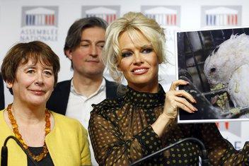 Pamela Anderson, Lorans Abej