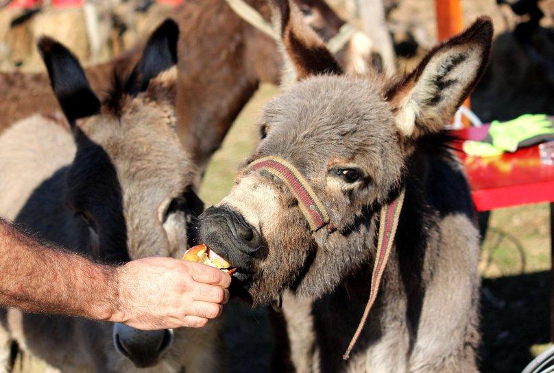 Besplatno mazanje magarca pic