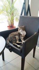 mačak Zevs