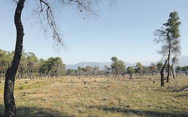 Ćemovsko polje