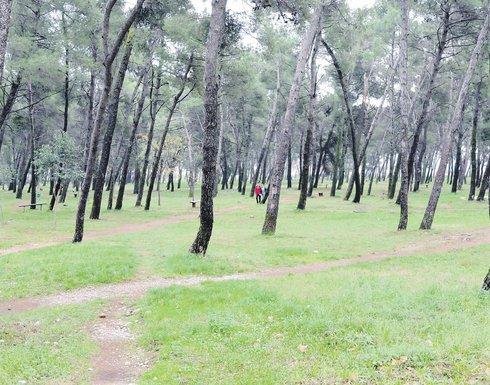 Tološka šuma