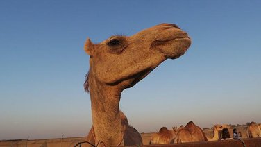 kamila Inžaz