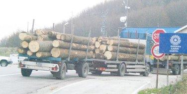 šumska građa