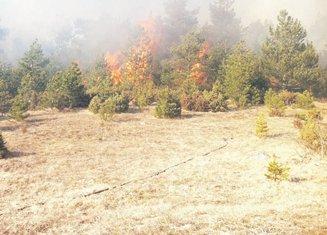 šuma požar