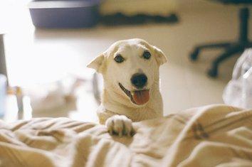 Gluta, najsrećniji pas na svijetu