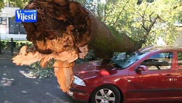 Oboreno stablo u Bokeškoj