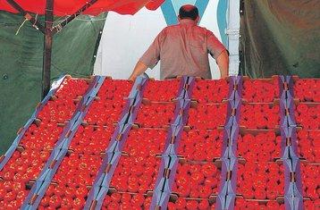 paradajz, Boris Pejović