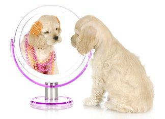 pas, ogledalo