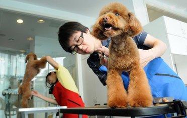 kinezi i psi