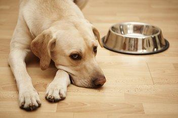 pas, hrana za pse