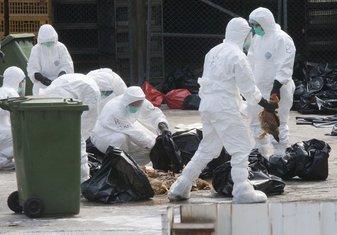 ubijanje peradi u Hong Kongu