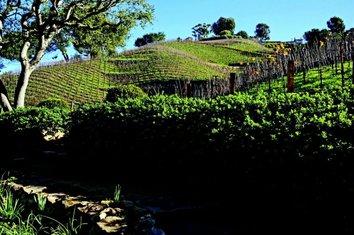Moraga vinogradi