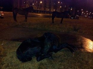 povrijeđen konj