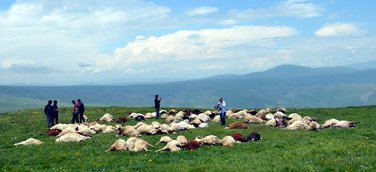 ovce, Turska, udar groma