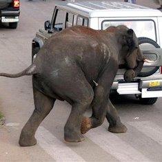 pijani slonovi