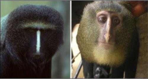 nova vrsta majmuna