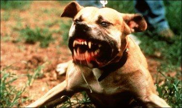 Pas, napad
