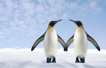homo pingvini