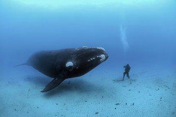 Kit i čovjek