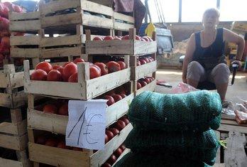 paradajz, distributivni centar