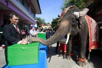 slon, glasanje, izbori, Tajland