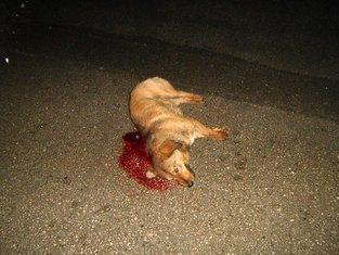 mrtvi psi