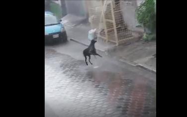 Pas kiša