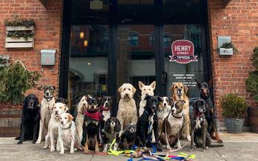 Psi u Saratogi
